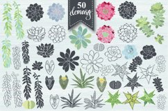 Succulents. Product Image 2