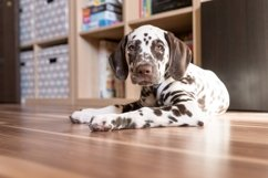 cute dalmatian puppy looking into camera Product Image 1