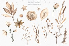 Winter plants watercolor collectoin Product Image 9