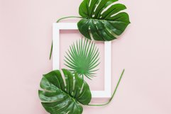 Hand drawn tropical leaves bundle Product Image 3
