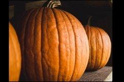 Pumpkins Stock Photo Bundle Product Image 2