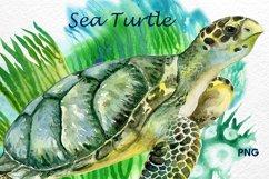 Sea turtle. Watercolor Green turtle Product Image 2