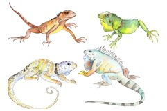 Iguana-1 Watercolor png Product Image 1