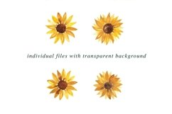 Sunflower Illustrations Watercolor | Clipart PNG Product Image 2