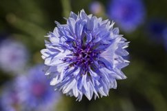 Powerful multicolor flowers outdoor shot Product Image 1