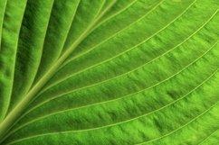 Close up green leaf spring background Product Image 1