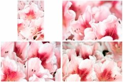 40 Pink Flower Blossom Photographs Close Up Product Image 6