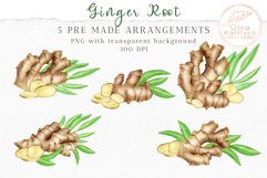 Ginger Root Clipart Collection. Watercolor Ginger Spice Product Image 3