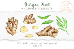 Ginger Root Clipart Collection. Watercolor Ginger Spice Product Image 2