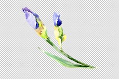 Irises blue Summer sky watercolor png Product Image 2