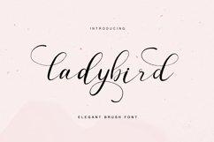 ladybird - elegant brush font Product Image 1