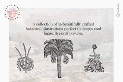 Premium Botanical Illustrations - Plants Product Image 2