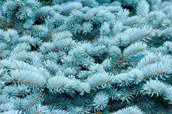 Blue spruce, Christmas, New Year background Product Image 1