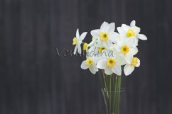 A bouquet of narcissus on a dark background Product Image 1