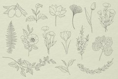 Botanical Procreate stamp brushes, vector clipart Product Image 5