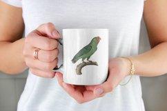 12 Vintage Birds Transparent Clipart Images Product Image 3