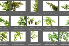 50 Tree Branch Photo Overlays Product Image 5