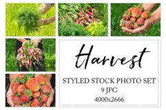 Harvest. Stock photo set. Product Image 1