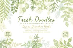 Hand drawn Leaves Branches & Herbs Fresh Doodle collection Product Image 1