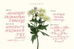 Mon Cheri Typeface + Extras Product Image 5