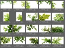 50 Tree Branch Photo Overlays Product Image 4
