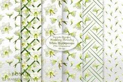 White Hippeastrum. Base Elements for Wedding Floristry. Product Image 3