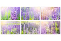 Lupine. Styled stock photo set. Product Image 4