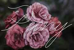 Peony script display font Product Image 1