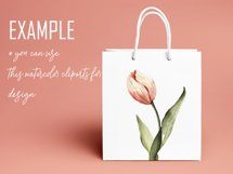 Watercolor clipart coral pink Tulips. Floral digital set PNG Product Image 5