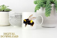 Bumble Bee Clipart Watercolor SVG PNG PDF JPEG Product Image 3