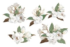 Magnolia Flower, Watercolor Floral clipart Product Image 2