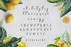 Web Font Shandy Product Image 2
