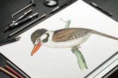 Birds Bundle Vintage Clipart Set Product Image 6