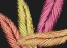 Fuzzy Feathers PNG Product Image 4
