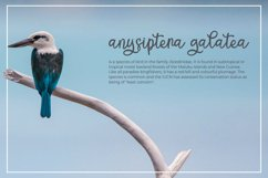 Cantica Script - A Hand-Written Calligraphy Font Product Image 3