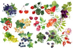 Watercolor fruits and berries Product Image 2