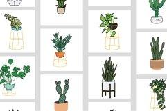 Houseplants Bundle Product Image 5