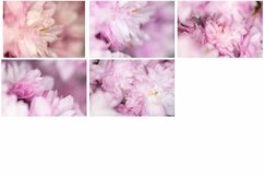 50 Pink Flower Blossom Photographs Close Up Backgrounds Product Image 3