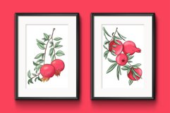 Pomegranate hand drawn clipart Product Image 2