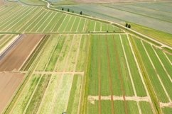 Agricultural land with green crops from above Product Image 1
