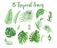 Tropical leaves and flowers clipart Product Image 2