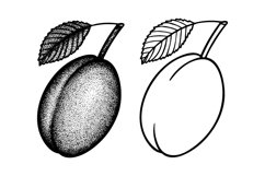 Plum engraving style vector illustration. Product Image 2