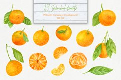 Tangerines - Hand drawn Watercolor clipart elements 300 DPI Product Image 2