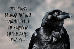 Wild Crow Product Image 5