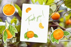 Tangerines - Hand drawn Watercolor clipart elements 300 DPI Product Image 4