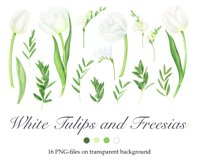 Watercolor white tulips and freesia clipart Product Image 2