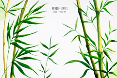Bamboo. Watercolor illustrations. Product Image 3
