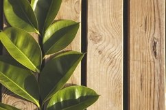 Mockup from wooden planks. Frame made from green leaves. Product Image 1