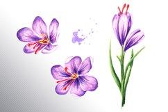 Saffron Product Image 4