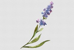 Bouquet of idyll lavender Watercolor png Product Image 7